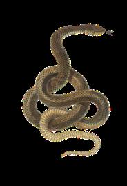 snake-2082037__340